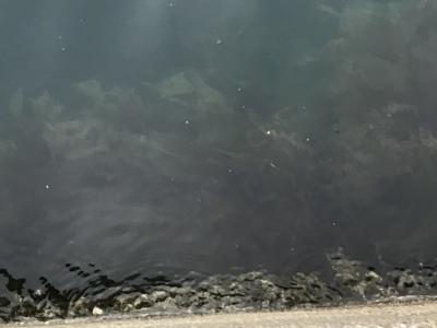 海中で揺れる海藻