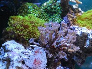 様々なサンゴ