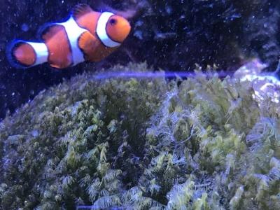 繁茂した海藻