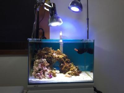 45cm水槽