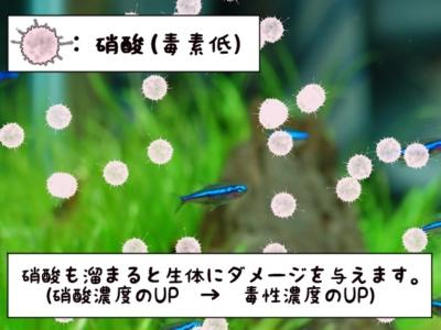 硝酸と魚のイメージ図