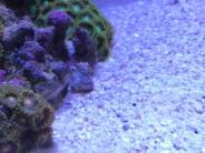 細めのサンゴ砂