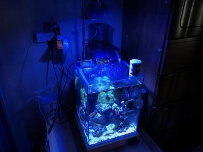 小型海水水槽