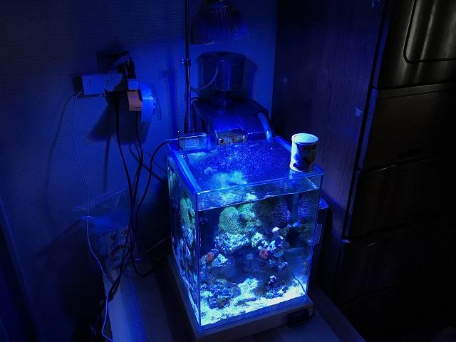 30cm小型海水水槽