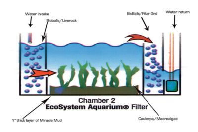 マッドシステムの構造(エコシステムアクアリウムより引用)