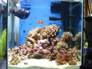 30cm海水水槽