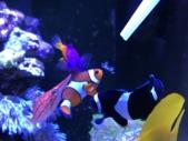 スポイトから餌を食べる海水魚