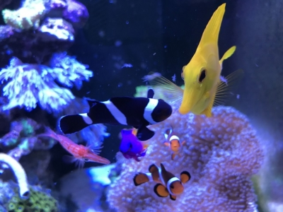 餌を食べに集まった海水魚