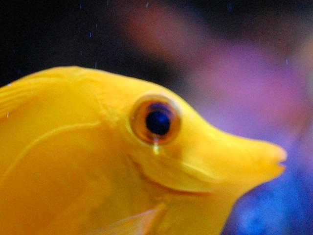 目の白濁が治ってきたキイロハギ