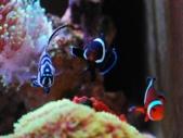 3匹の海水魚たち