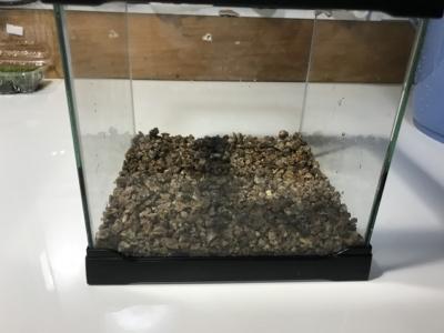 軽石を敷き詰めた水槽