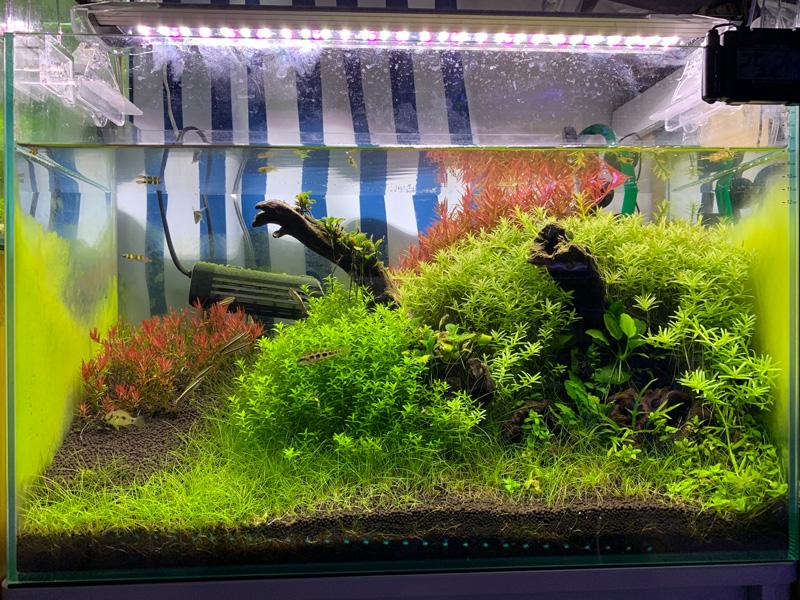 15ヶ月目の60cm水草水槽