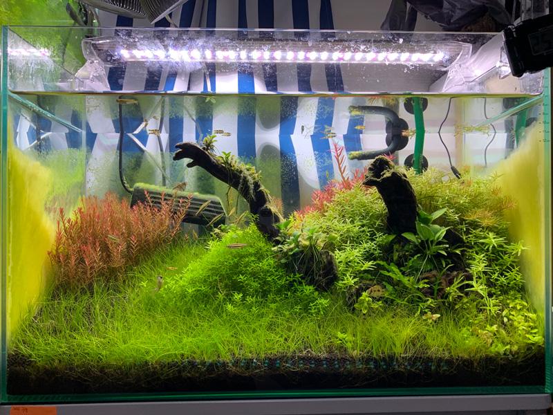 16ヶ月目の60cm水草水槽