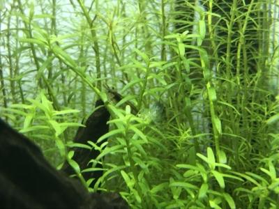 トリミング不足で密度の薄い水草
