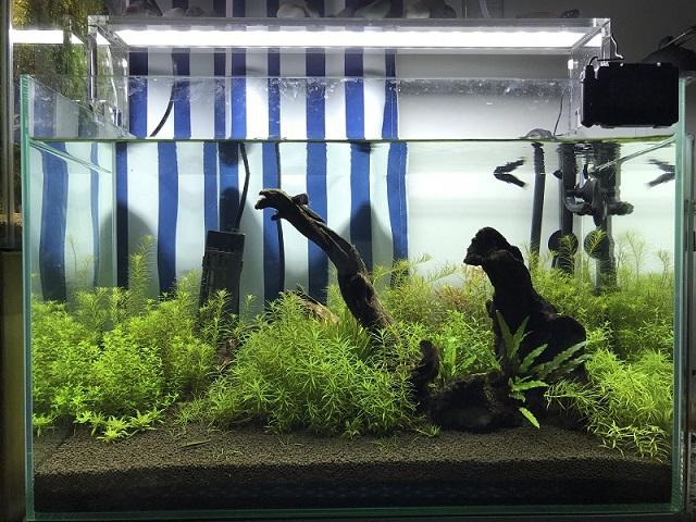 セット後3ヶ月の水草水槽
