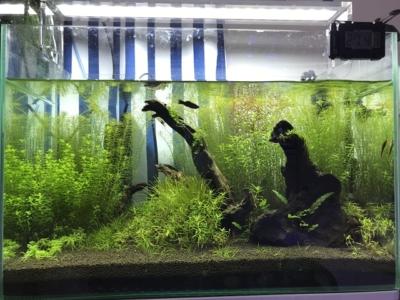 伸びた有茎草の水槽