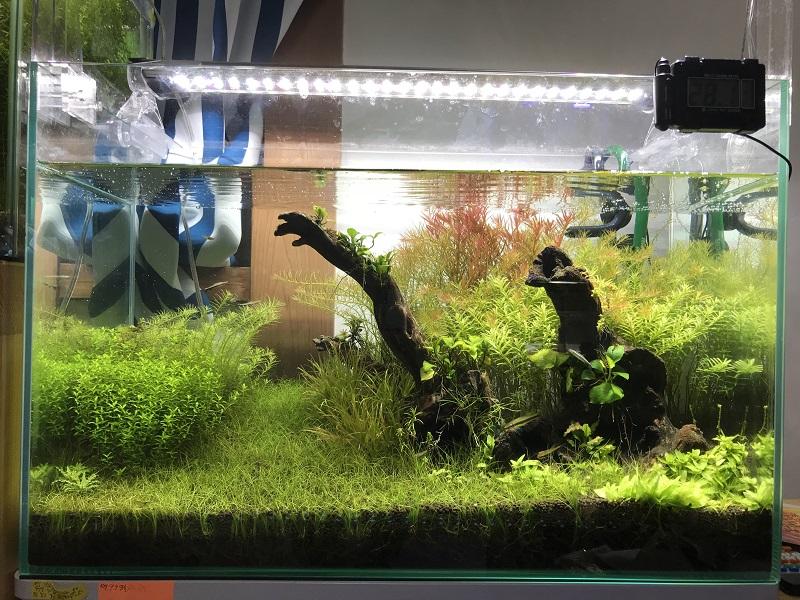 11ヶ月目の水草水槽