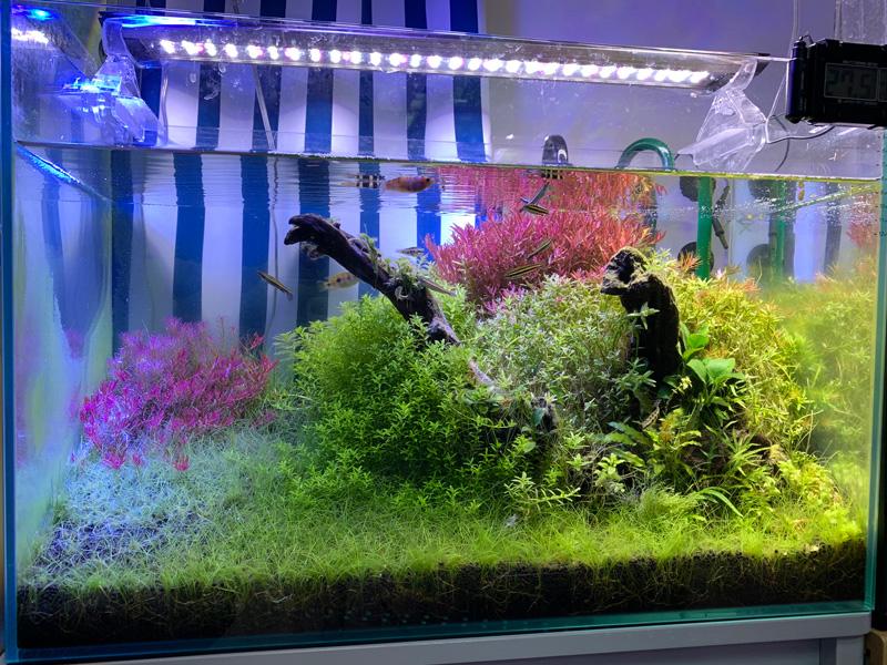 18ヶ月目の60cm水草水槽