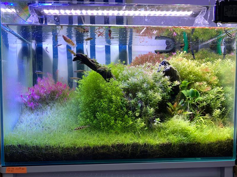 20ヶ月目の60cm水草水槽