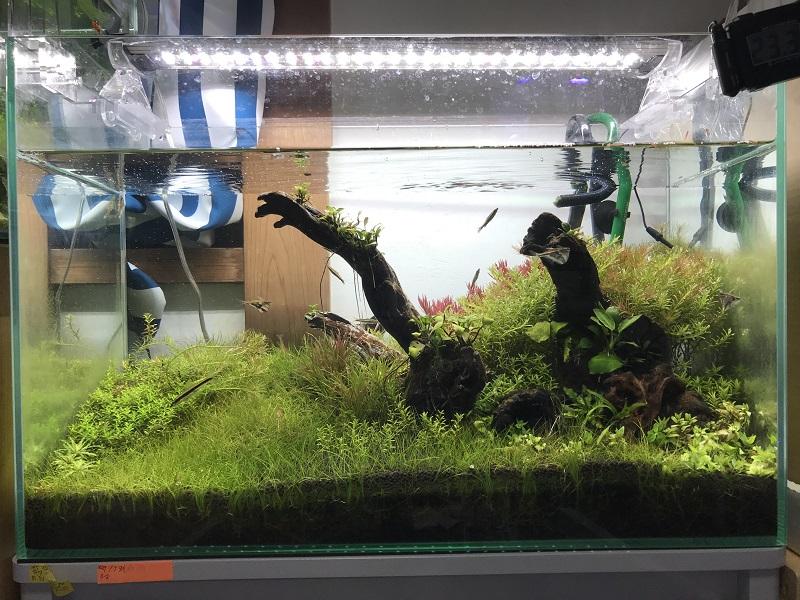 12ヶ月目の水草水槽