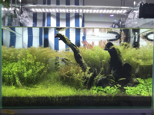 7ヶ月後の水草水槽