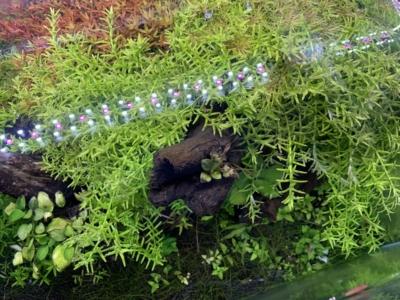 上から見た水草水槽