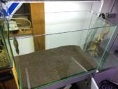 ソイルを敷いた60cm水槽