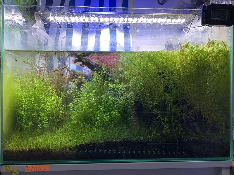 14ヶ月目の水草水槽