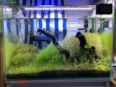 14ヶ月目の水草水槽(トリミング後)