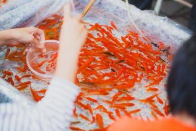 夏祭りの金魚すくい