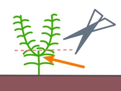 水草のカット図、脇芽