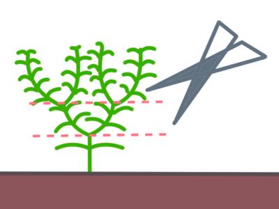 ボリュームを出す水草のカット方法