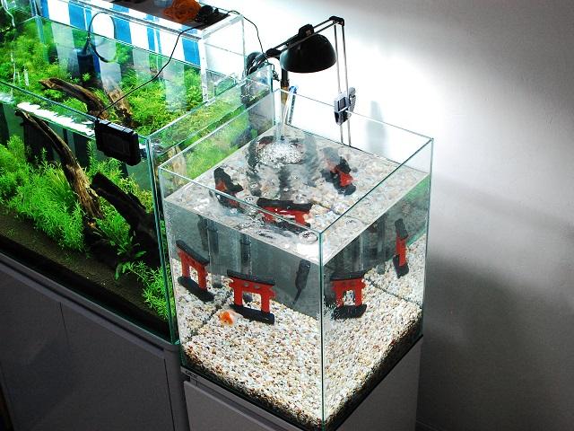 金魚水槽のあるお部屋