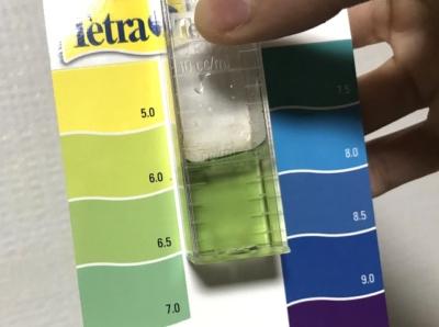 pH測定の様子