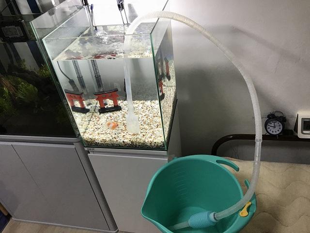 金魚の水槽を水換えしている様子