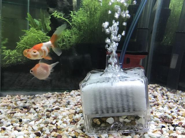 投げ込み式フィルターと金魚