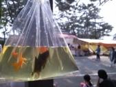 金魚すくいでゲットした金魚たち