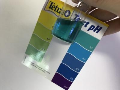 ビタミンCの飴で塩素を中和した水質