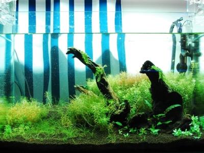 ADAアクアスカイGを使用した水草レイアウト