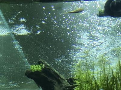 油膜で気泡が溜まった水面