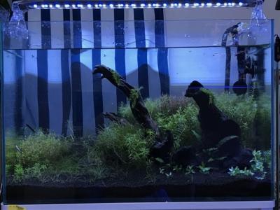 レイマックスで青い照明を設定した水槽