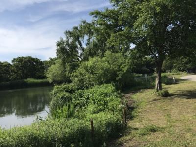のどかな風景の河川環境楽園
