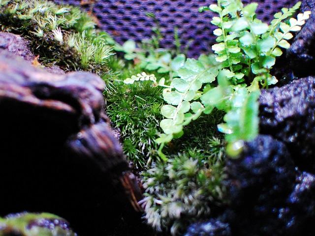 テラリウムのコケと植物