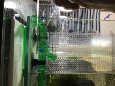 2213の排水パイプでガラス縁からの必要高さ