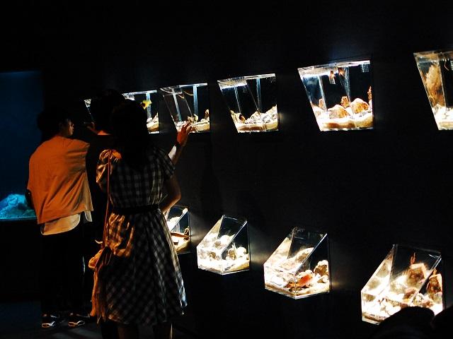 京都水族館の展示