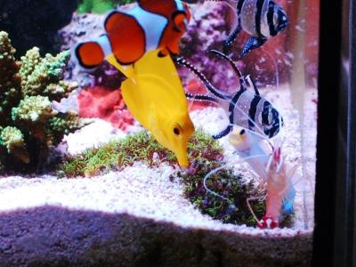 エサをたべる海水魚たち
