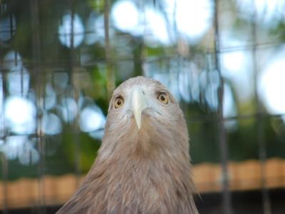 天王寺動物園のワシ