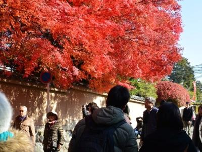 京都の東福寺の紅葉