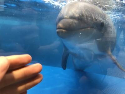 京都水族館の距離が近いイルカ