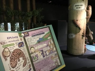 オオサンショウウオだらけの京都水族館
